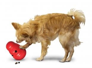 Kong Wobbler toy for dogs now reduced