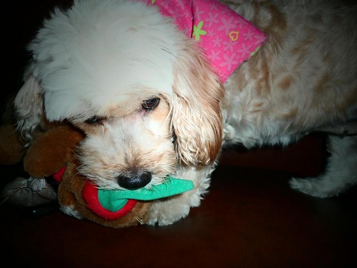 Mi hermosa Layka jugando con su peluche! <3