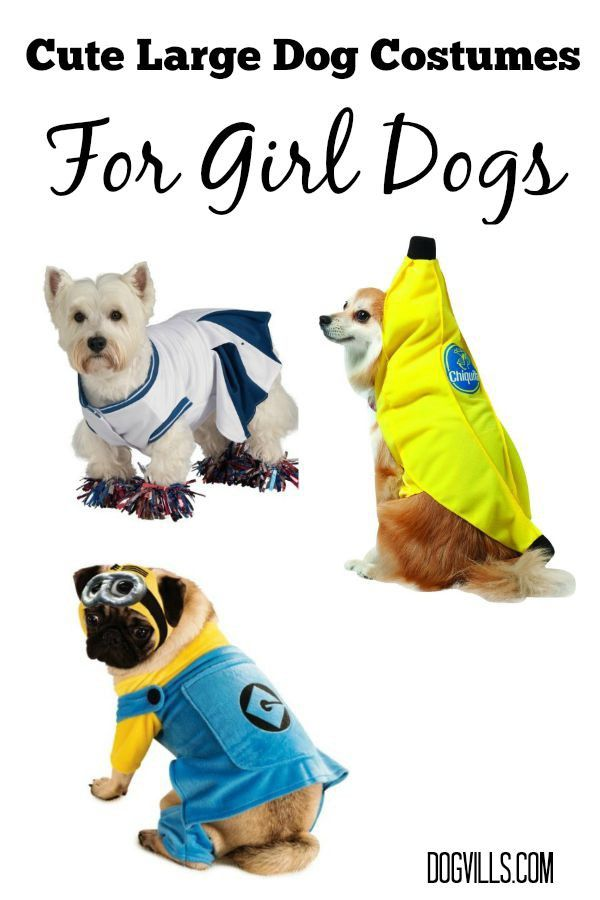 dog and girl halloween costume ideas