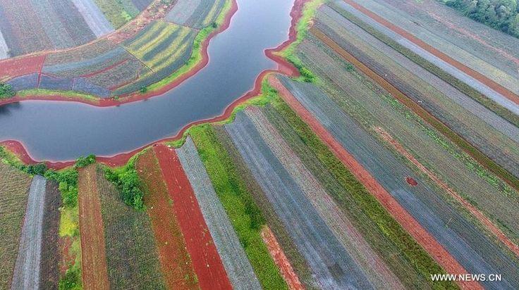 "18740309_1933654123581904_880478110635422453_n.jpg (895×502) ""菠萝的海""Pineapple farm——2016年广东湛江徐闻县Guangdong"