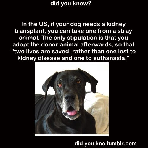 good to know?Animal Lovers, Cat, Dogs, Random Things, Mine