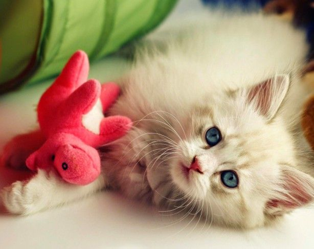 super schattig, kitten