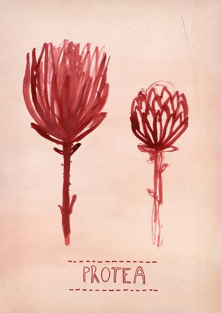 New Protea print.