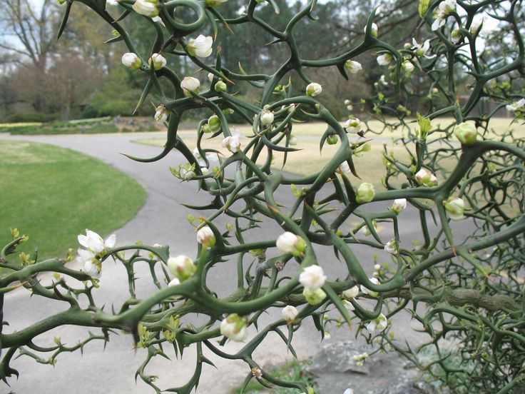 169 Best Cold Hardy Plants Images On Pinterest Gardening