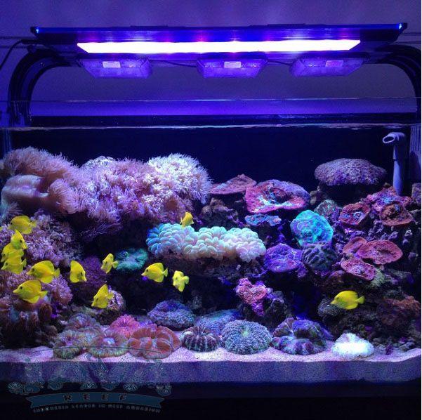 pembuatan aquarium laut untuk restoran di jakarta selatan