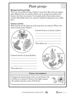 Printables Homeschool Science Worksheets 1000 images about homeschool biology on pinterest types of in this science worksheet your child learns that common features help identify different plants such as ferns