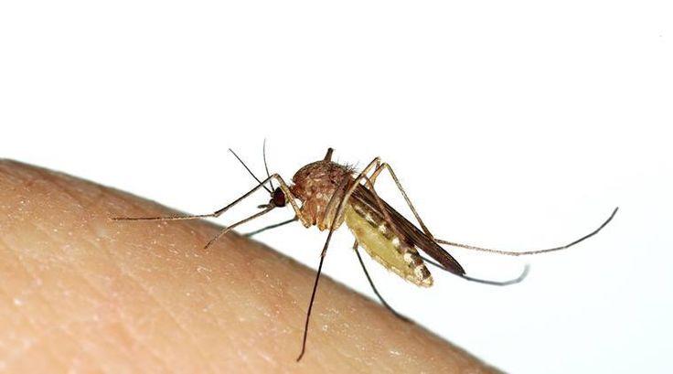 Himachal Pradesh on dengue alert after 401 test positive - The Indian Express #757Live