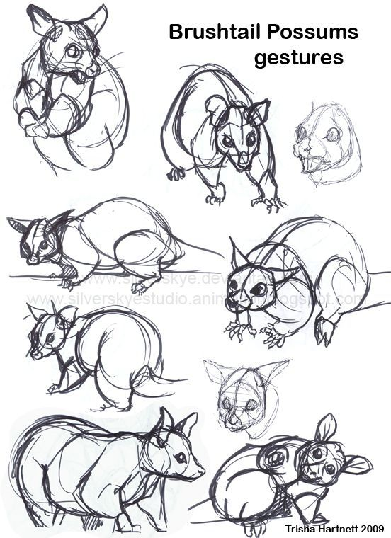 Image result for how to draw a possum hanging from a tree