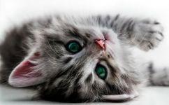 fototapet pisicuta