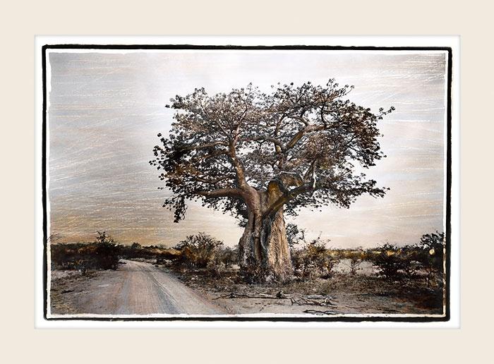 African Landscape - Roadside Baobab - Marlene Neumann Fine Art Photography  www.marleneneumann.com  neumann@worldonline.co.za  Perfect for Home/Office Decor & Unique Gifts