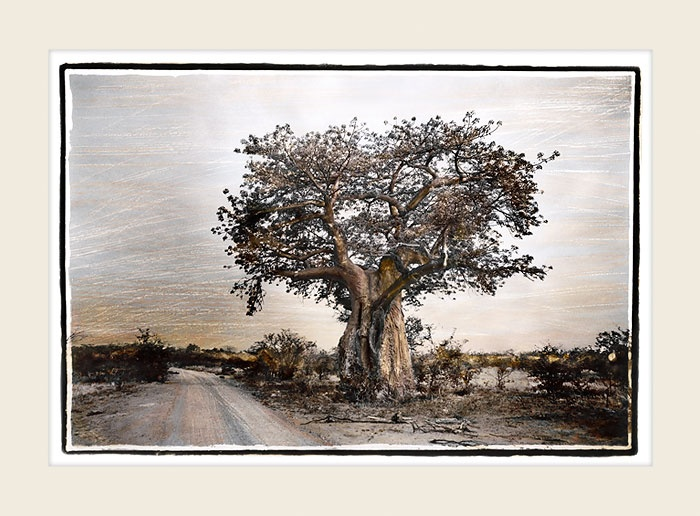 African Landscape - Roadside Baobab - Marlene Neumann Fine Art Photography  www.marleneneumann.com  neumann@worldonline.co.za  Perfect for Home/Office Decor & Unique Gifts