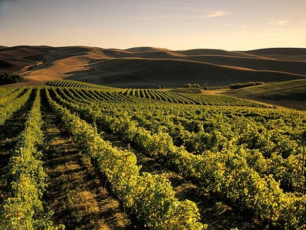 87 best Wine Country images on Pinterest  Washington state Wine country and Vine yard
