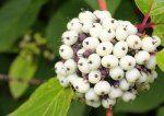 Syksyn tuulia – mihin katoaa aika? Flower, Photos of  autumn