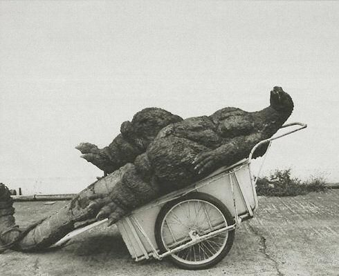 Godzilla taking a nap in a wheelbarrow (Behind the Scenes  on Twitter)