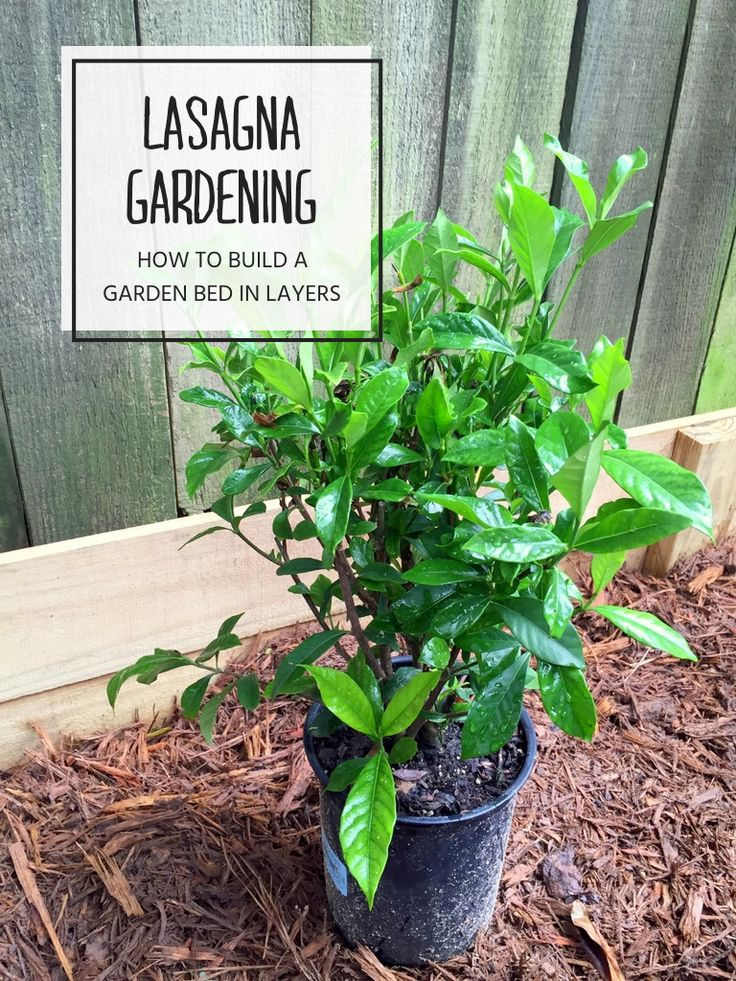 Lasagna gardening how to layer a raised garden bed gardens home and layering - Lasagna gardening in containers ...