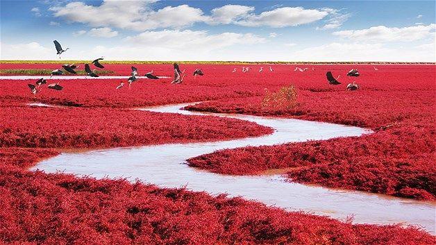 Red Beach atau Red Blanket, terletak di wilayah delta Sungai Liao He dekat Panjin City, China