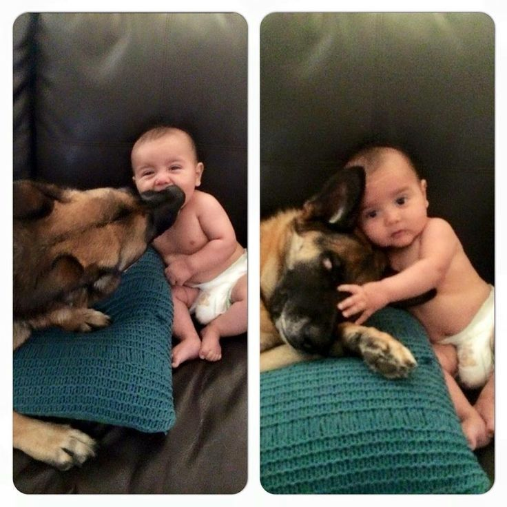 GSD....protector