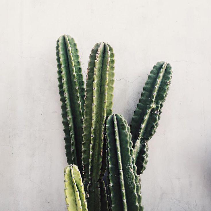 I Am Heading North Plant Life Cactus