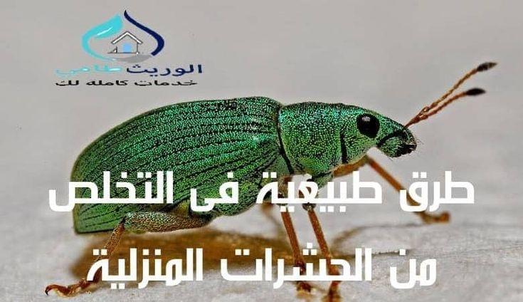 طرق طبيعية فى التخلص من الحشرات المنزلية Turtle