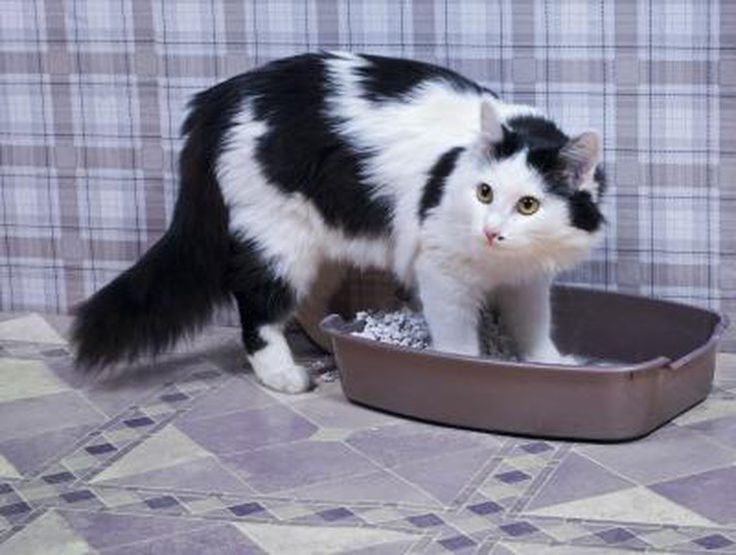 Cat Urine Has An Extremely Powerful, Persistent And Unpleasant Odor. When  Cats Urinate On Carpets, Rugs Or Furniture It Can Be Very Difficult To Get  Rid Of ...