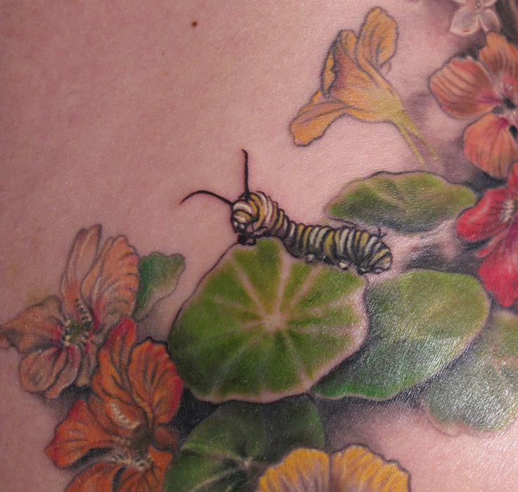 Caterpillar and Nasturtiums tattoo from Butterfat Studios- Chicago .