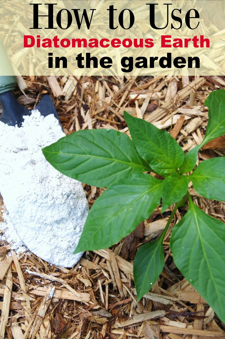 Using Diatomaceous Earth in the Garden - Turning the Clock Back