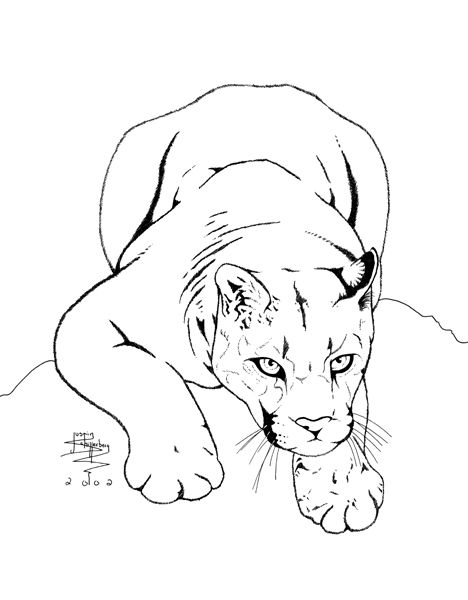 Cougar Face Line Drawing : Best panther art images on pinterest big cats lion