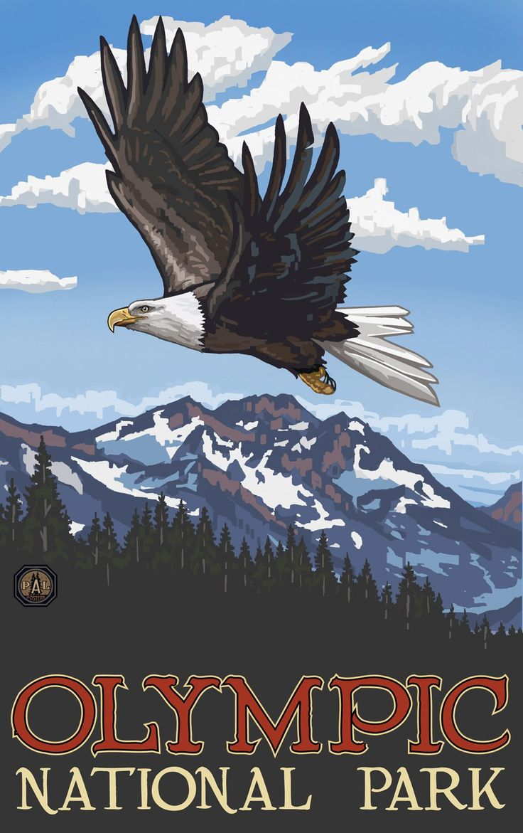 Northwest Art Mall Olympic National Park Eagle Soaring Unframed Poster Print by Paul A. Lanquist, 11-Inch by 17-Inch