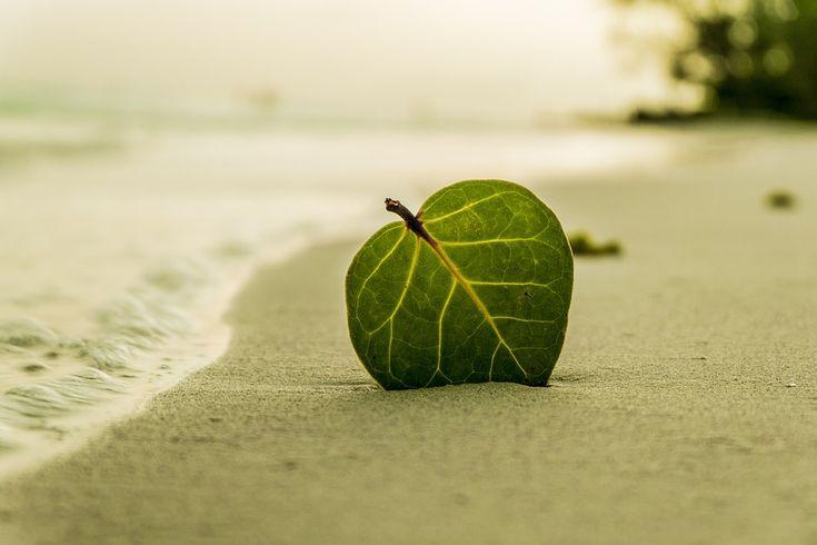 Leaf on a beach  http://healthymassageguide.com/