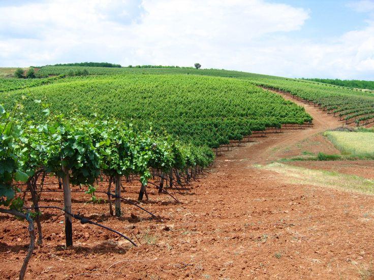 Domaine Kikones , Thrace , Greece. Organically cultivated Chardonnay, Syrah, Sangiovese, Limnio, Malagousia...