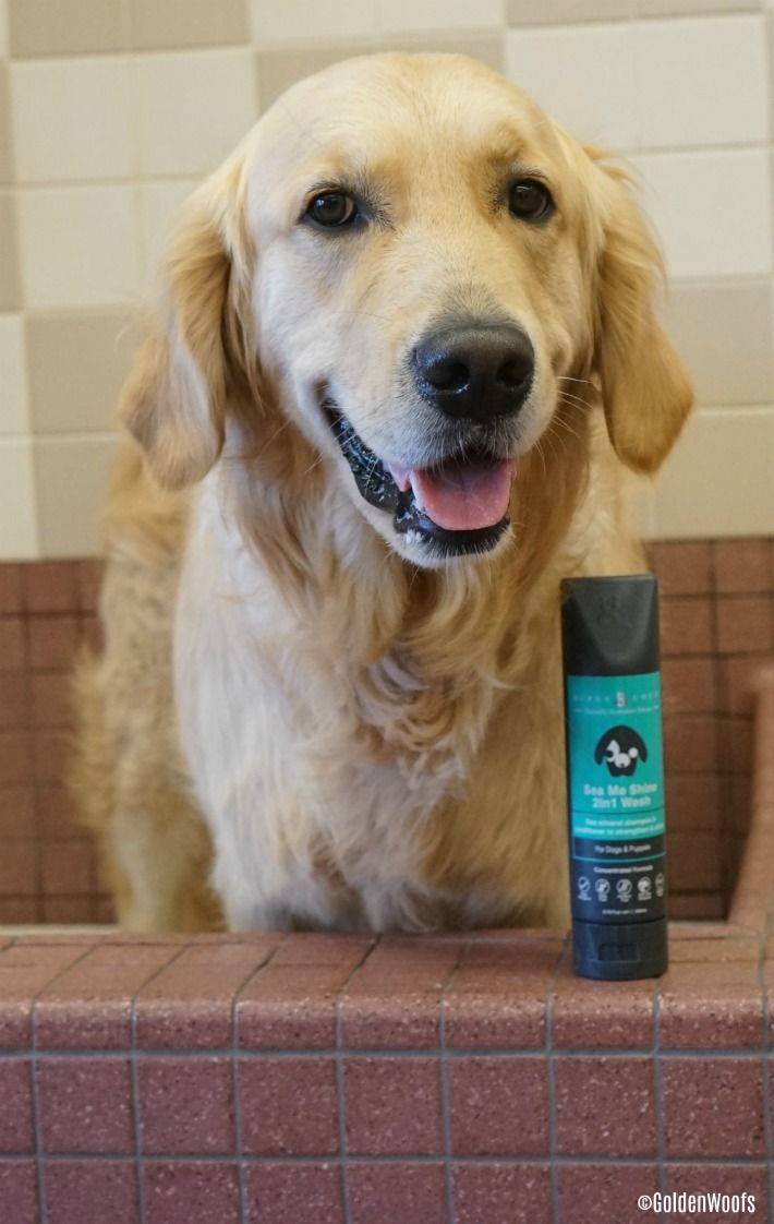 Pin On Dog Product Reviews Product Feature
