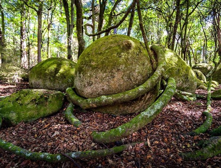 journey into an enchanted forest and be intrigued by the Whitecliffs Boulders #nicesurprise #thingstodo #Rangitikei #NorthIsland #travelnz #nzmustdo #nztrip #NewZealand #itsTime2Go! : @roterrucksack