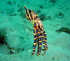 """Résultat de recherche d'images pour """"animaux marins les plus dangereux"""""""
