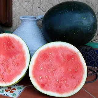 Harvest Moon Seedless Watermelon Seeds