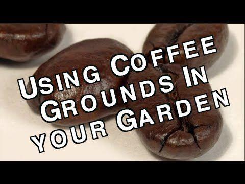 27 Best A Vinegar Epsom Salts Coffee Grounds Images On Pinterest Growing Vegetables