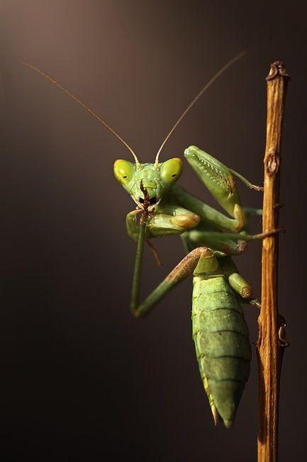 Shhhh...(if a praying mantis did this to me I'd definitely keep quiet)