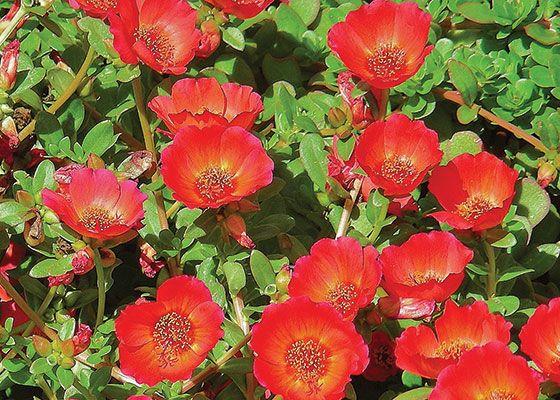 28 best south florida gardening ideas images on pinterest florida plant perennials in your south florida garden mightylinksfo