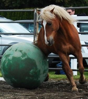 Horses play soccer at Equine Life Solutions!