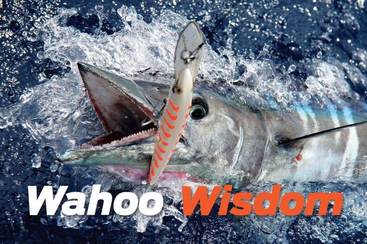 wahoo-wisdom