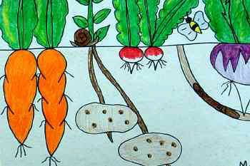 above and below vegetables