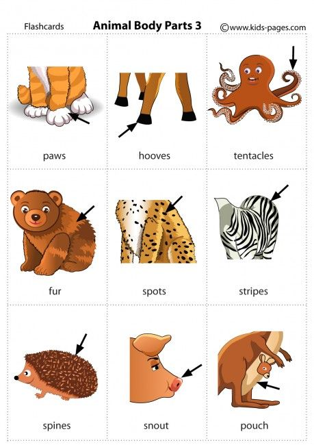 animal body parts 3 flashcard animals animal body parts english vocabulary learn english. Black Bedroom Furniture Sets. Home Design Ideas
