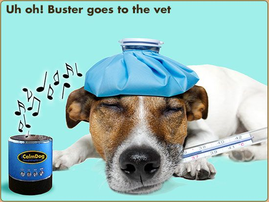 Through a Dog's Ear - Music Therapy for the Prevention & Treatment of Canine Anxiety  - Visit http://dvm360.com/FearFree to learn more about Fear-Free veterinary visits