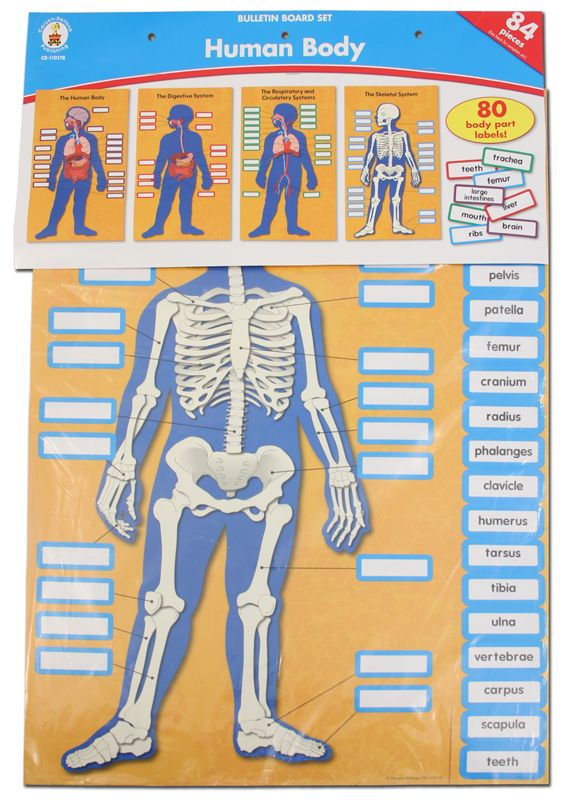 Human Body Charts | Main Photo (Cover)