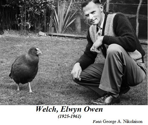 Elwyn Welch with takahe at Mount Bruce, New Zealand.