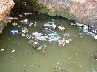 Chaos: La plastica avvelena la catena alimentare