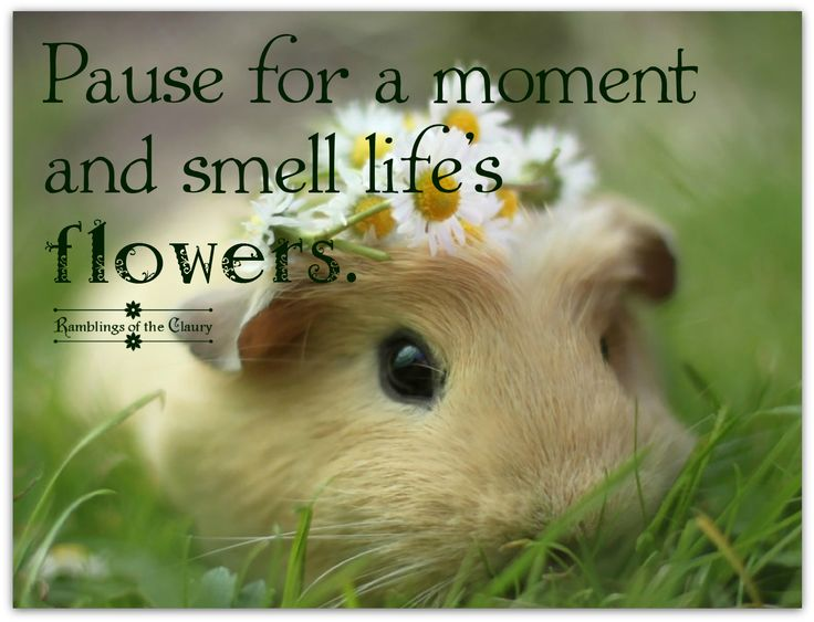 1000+ Quotes About Flowers On Pinterest