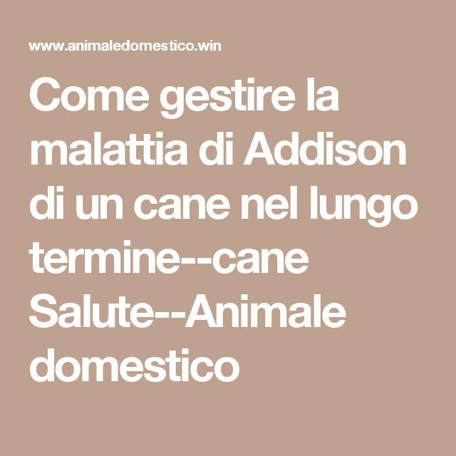 Come gestire la malattia di Addison di un cane nel lungo termine--cane Salute--Animale domestico