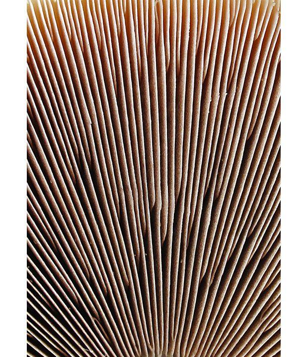 Fungi image by Warren Krupsaw