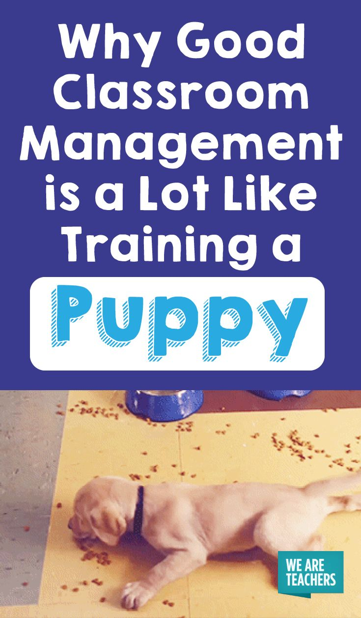 Good Classroom Management is a Lot Like Training a Puppy