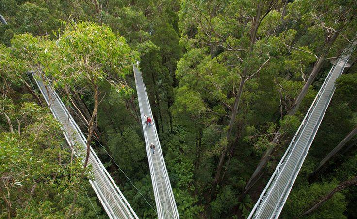 Treetop Walk | The Otway Fly Tree Top Adventures